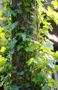 Abide/Vines