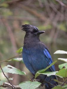 bird-763685_640